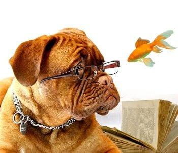 procrastination blog post featured image