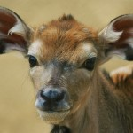 Image of a deer to help illustrate how to memorize spellings quickly using cute animals