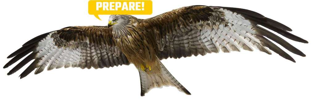 Illustration of Red Kit Eagle To Illustrate How Preparation Helps You Study Fast Magnetic Memory Method Blog