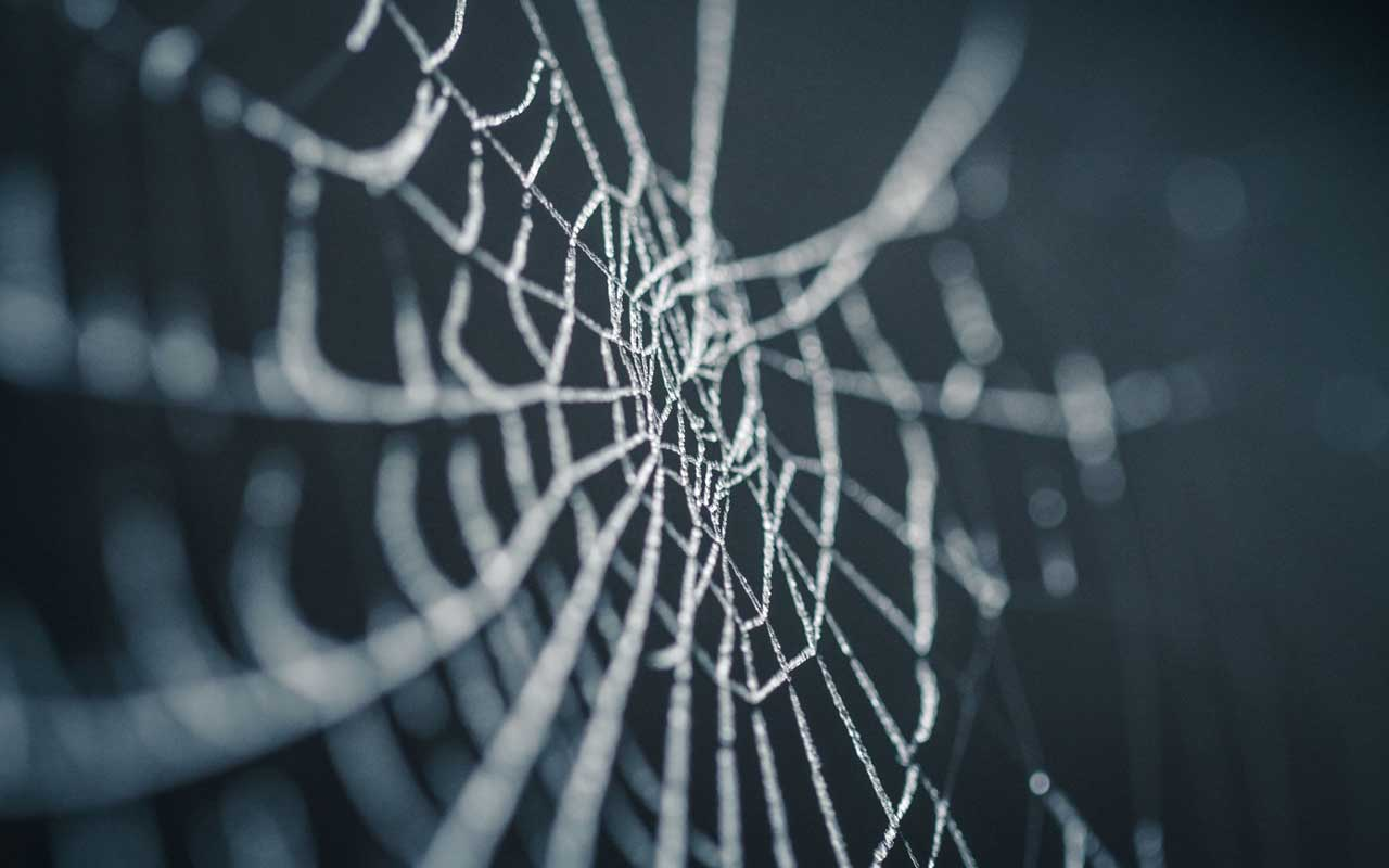 A spiderweb, like in the horror movie that your implicit memory now keeps you scared of spiders.