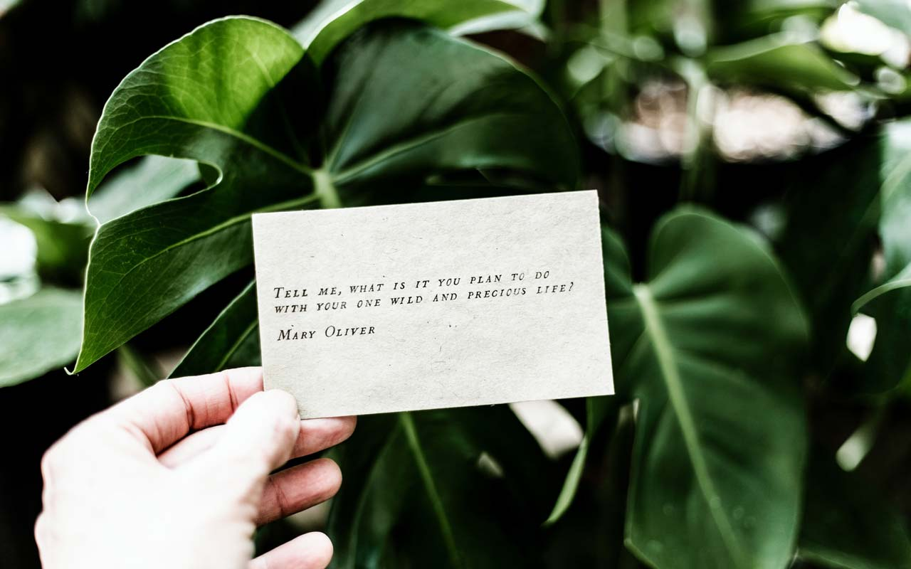 """A card with Mary Oliver's poem """"Tell me, what is it you plan to do with your one wild and precious life"""" in front of a green houseplant."""