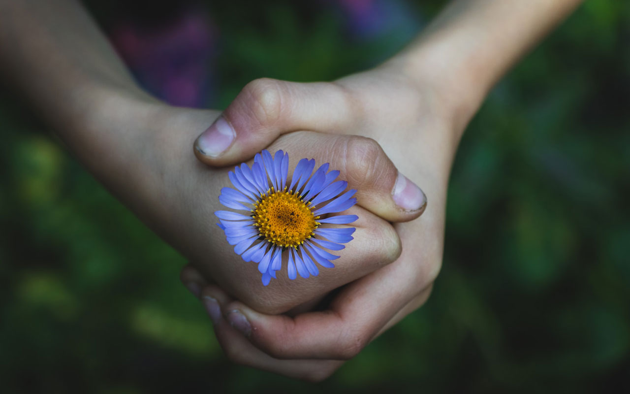 A fist closed around a blue flower. Physical calibration can help you focus on tasks.