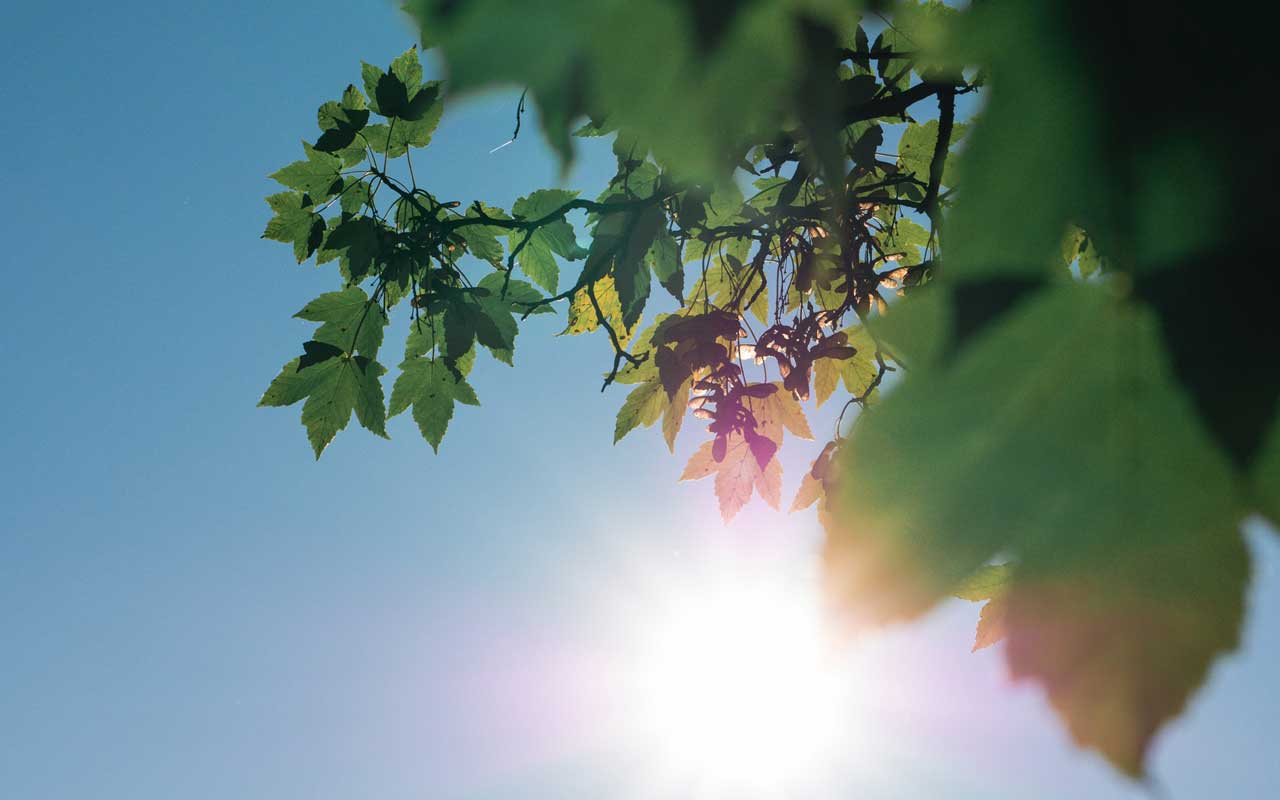 Looking up at the sky and sun through green leaves.
