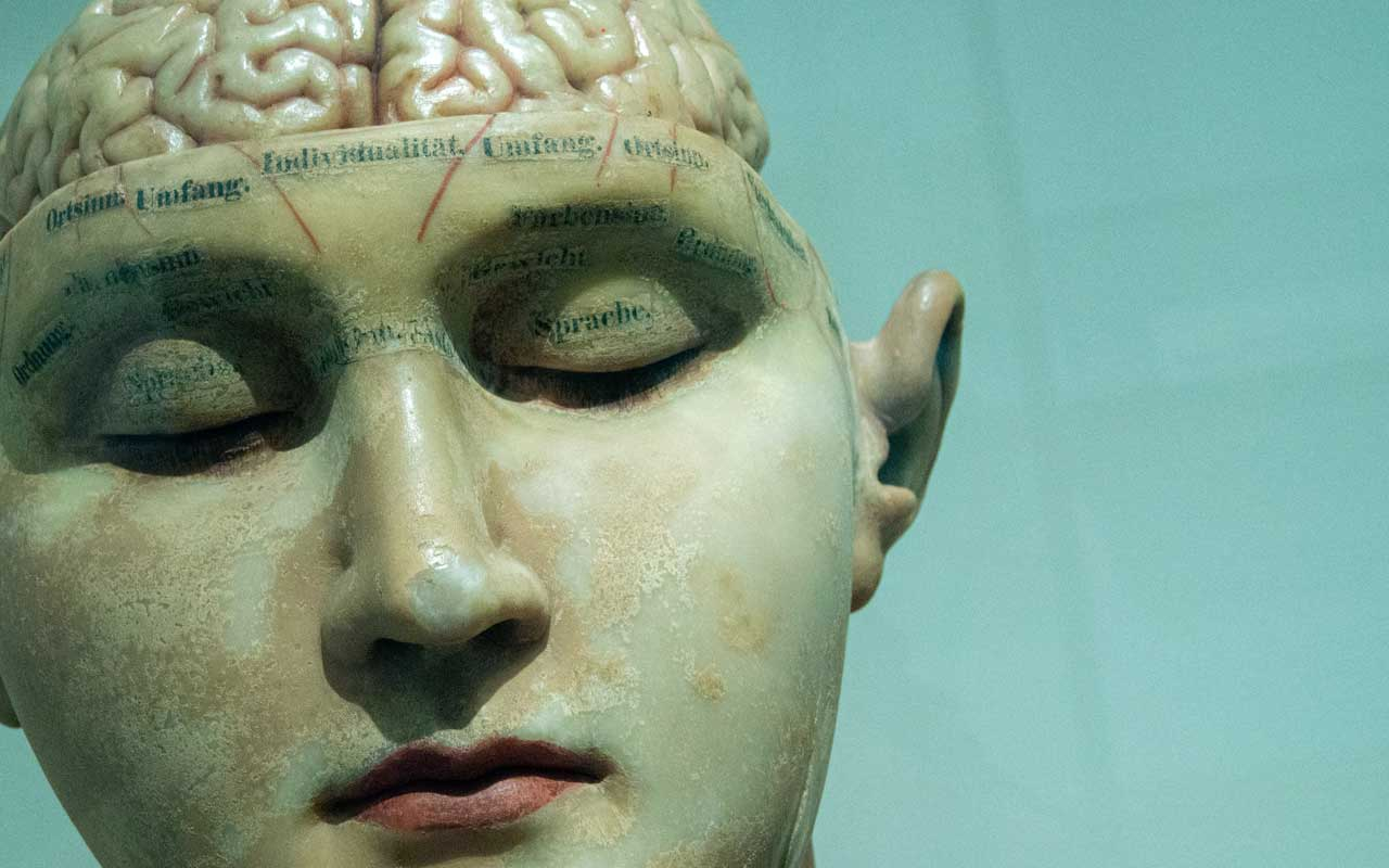 A model of the human brain. Memorization increases brain activation and helps you develop phenomenal memory.