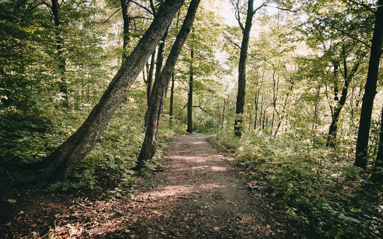 A dirt road through a wooded forest. Spending time in nature helps improve concentration.