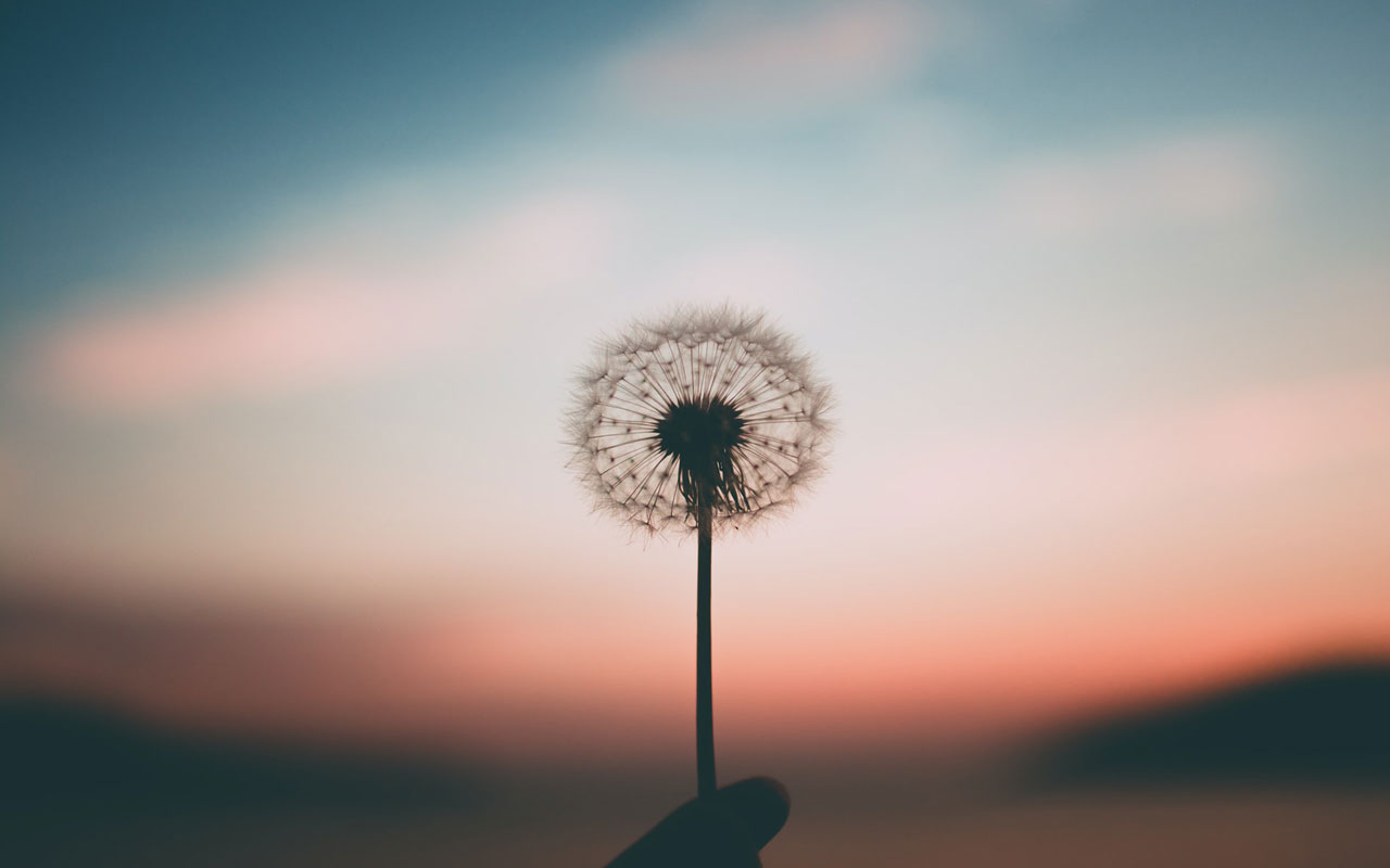 A dandelion seed head against a sunset. Mindfulness helps you be more aware and improve concentration.