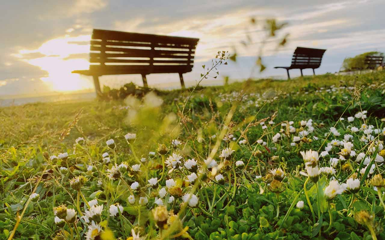 Park benches line a grassy field filled with wildflowers. You can use spatial anchors like a particular park you like to study in to help you concentrate on studies.
