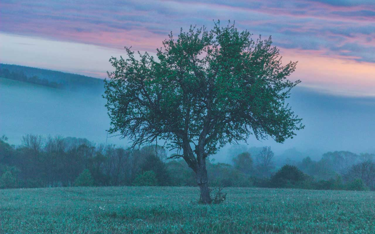 A tree at sunrise against a foggy mountain. This could be an image that comes to mind while using the KAVE COGS method.