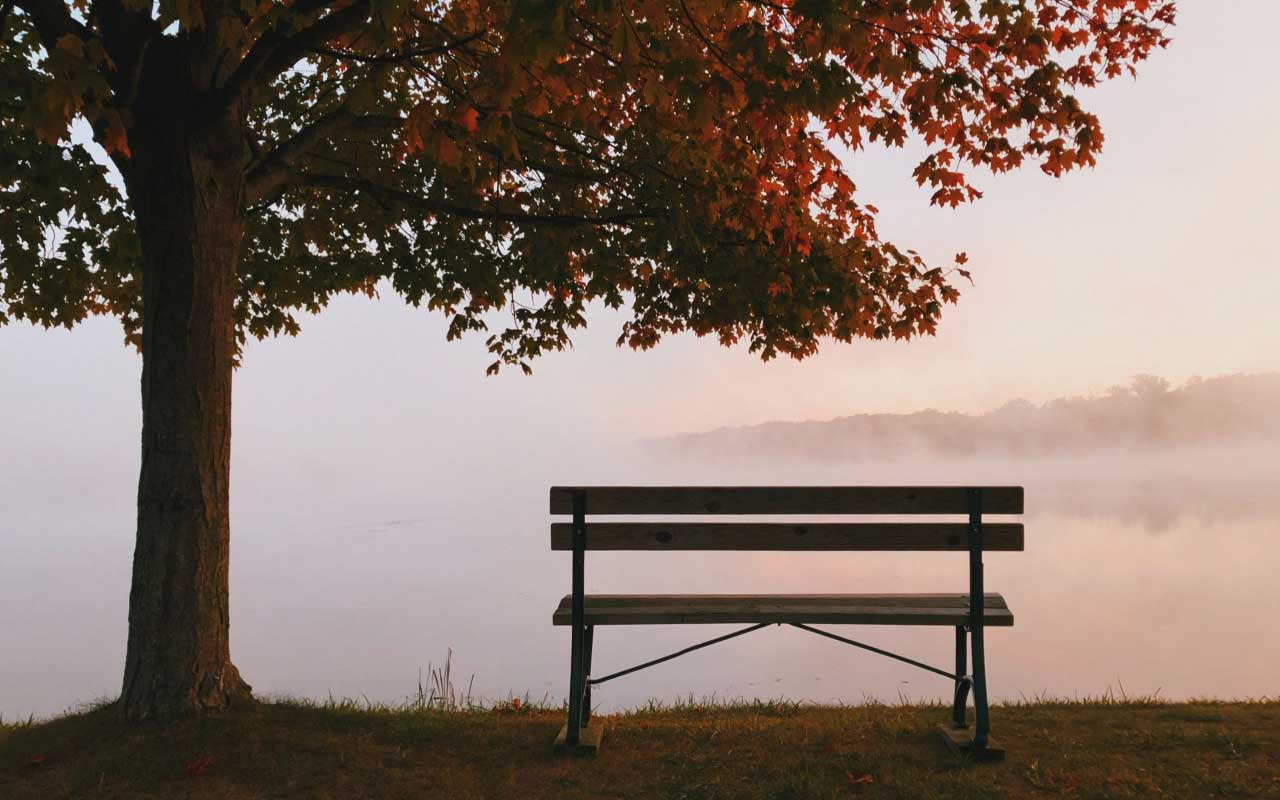 A bench under a tree looks over a foggy lake. This setting is much like a guided visualization I used before defending my dissertation.