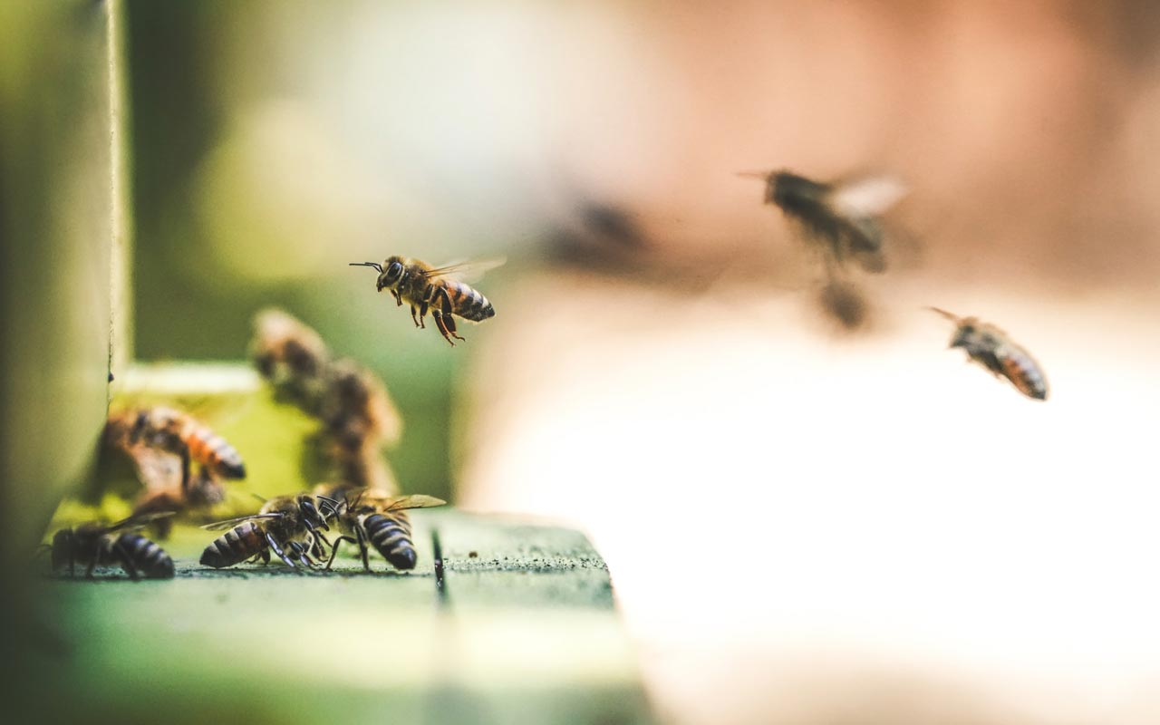 Bees fly toward the entrance to their hive. You can use specific bees to help you create a memorable number-rhyme system.