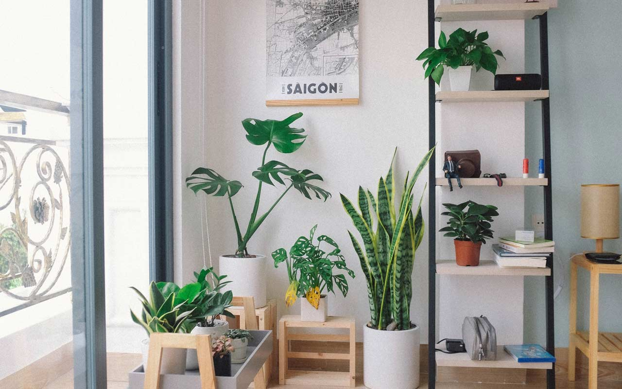 A bright study space with lots of houseplants and large windows that allow light into the room.