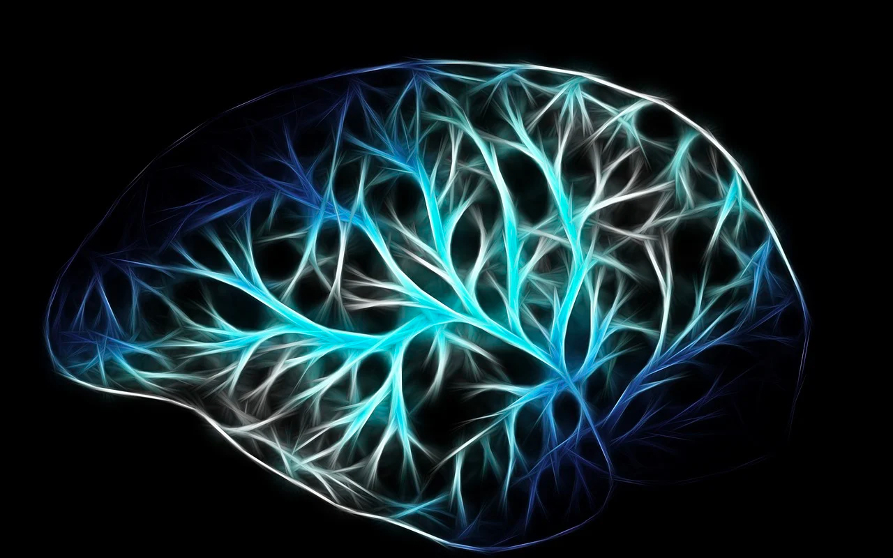 neurons in human brain