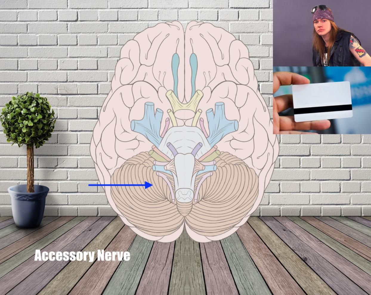 access nerve mnemonic example