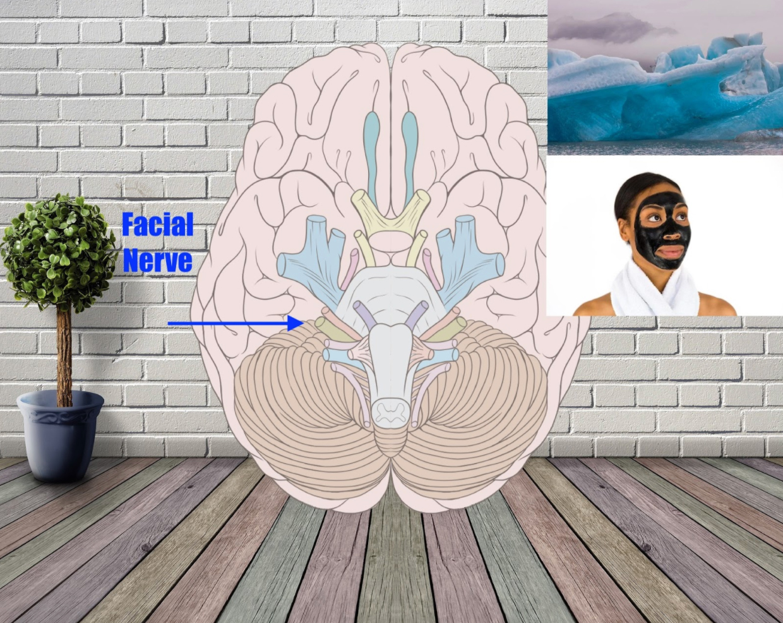 facial nerve mnemonic example