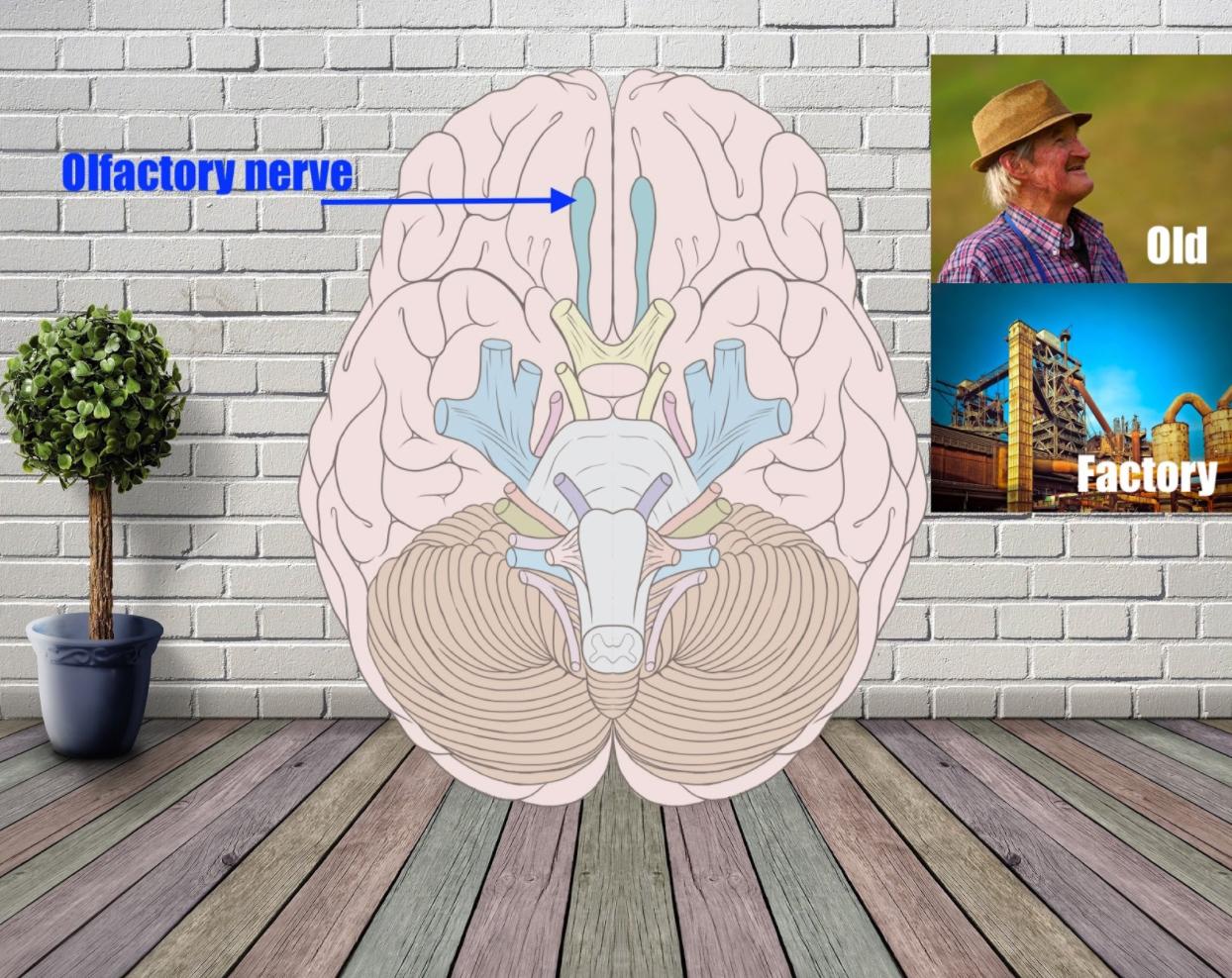olfactory nerve mnemonic example