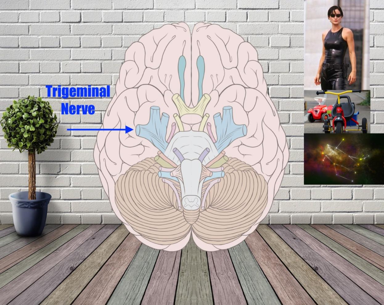 trigeminal nerve mnemonic example