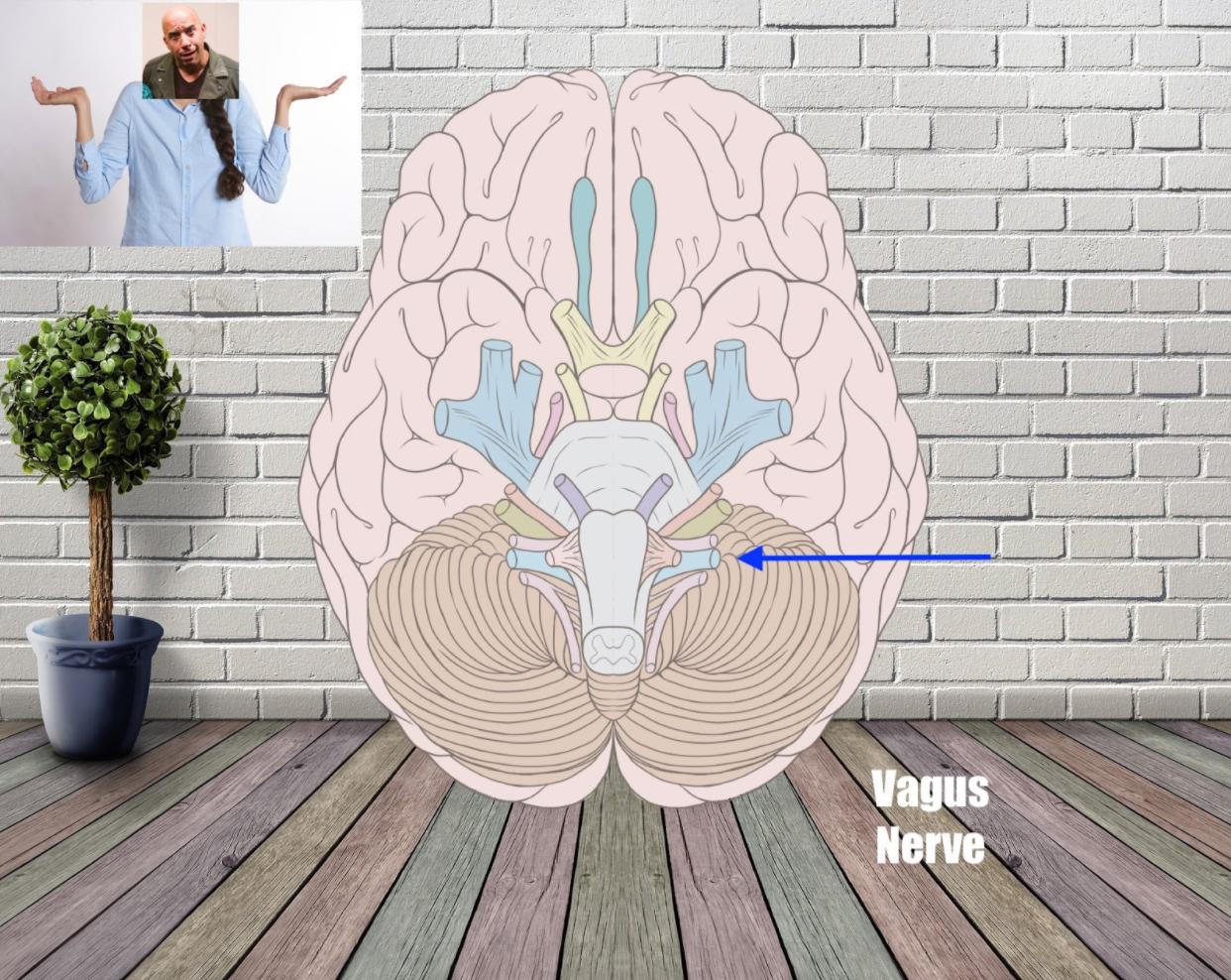 vagus nerve mnemonic example