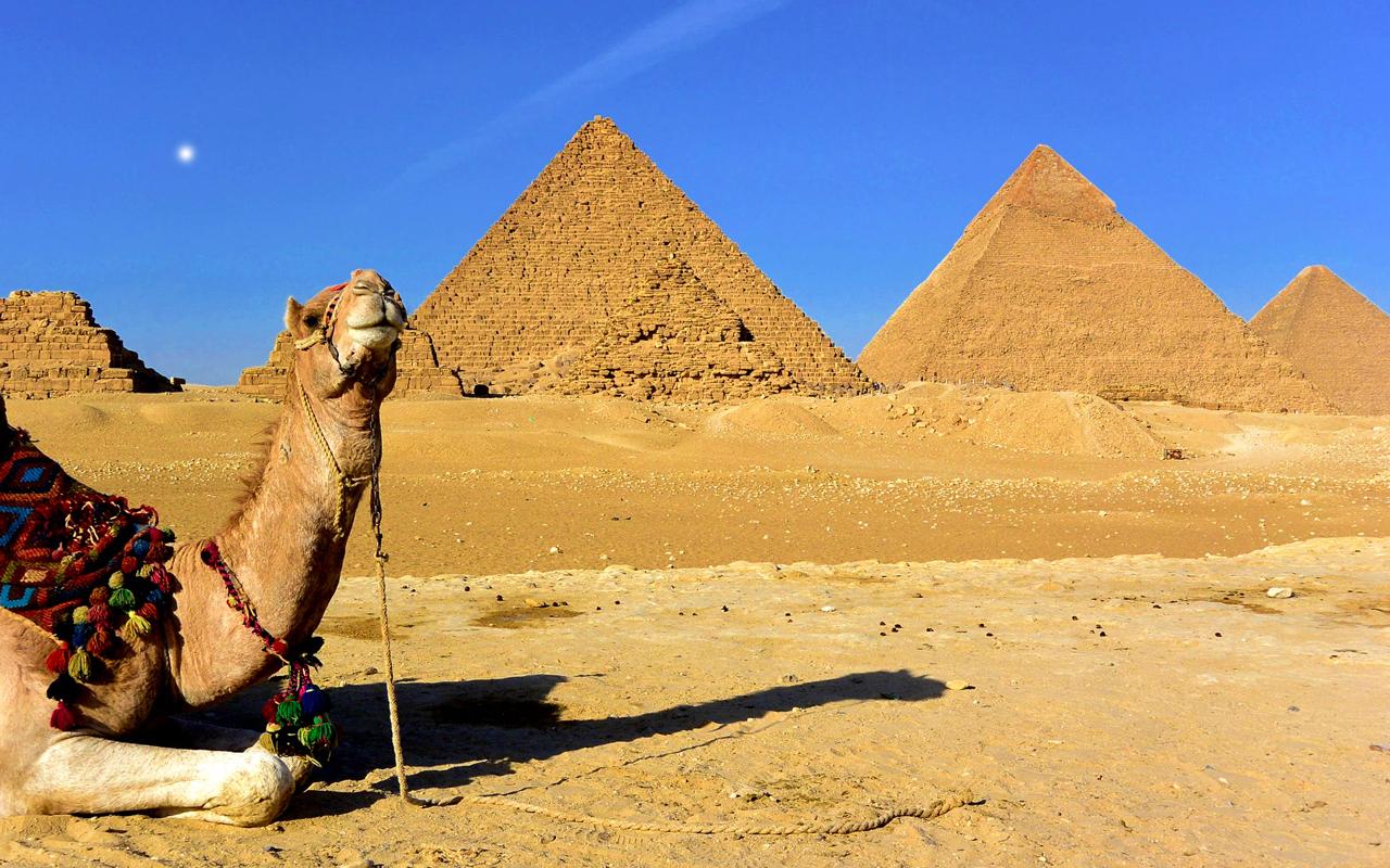 a camel and pyramids