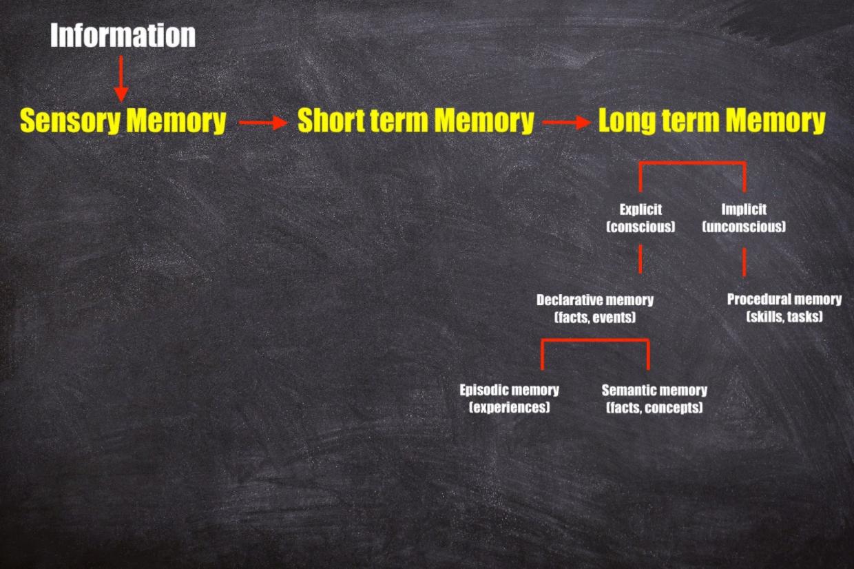atkinson shiffrin three stage types of memory model