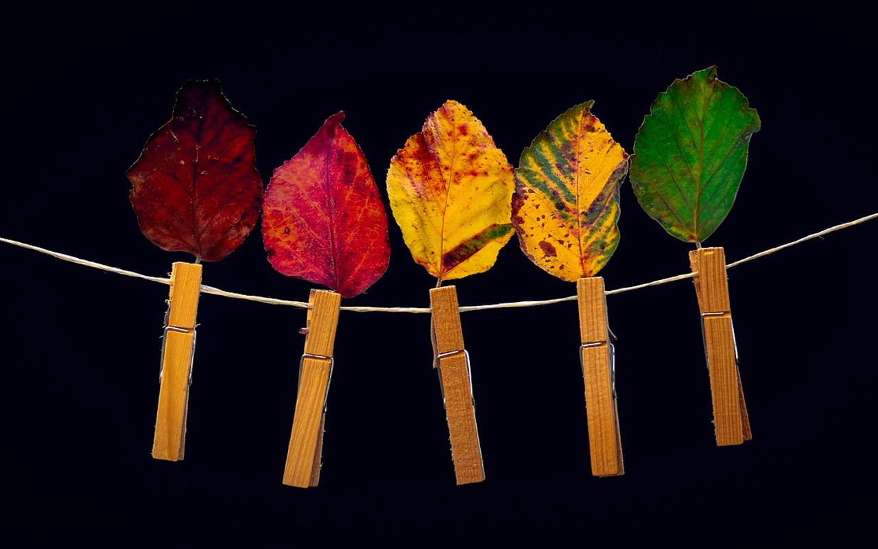 peg leaves