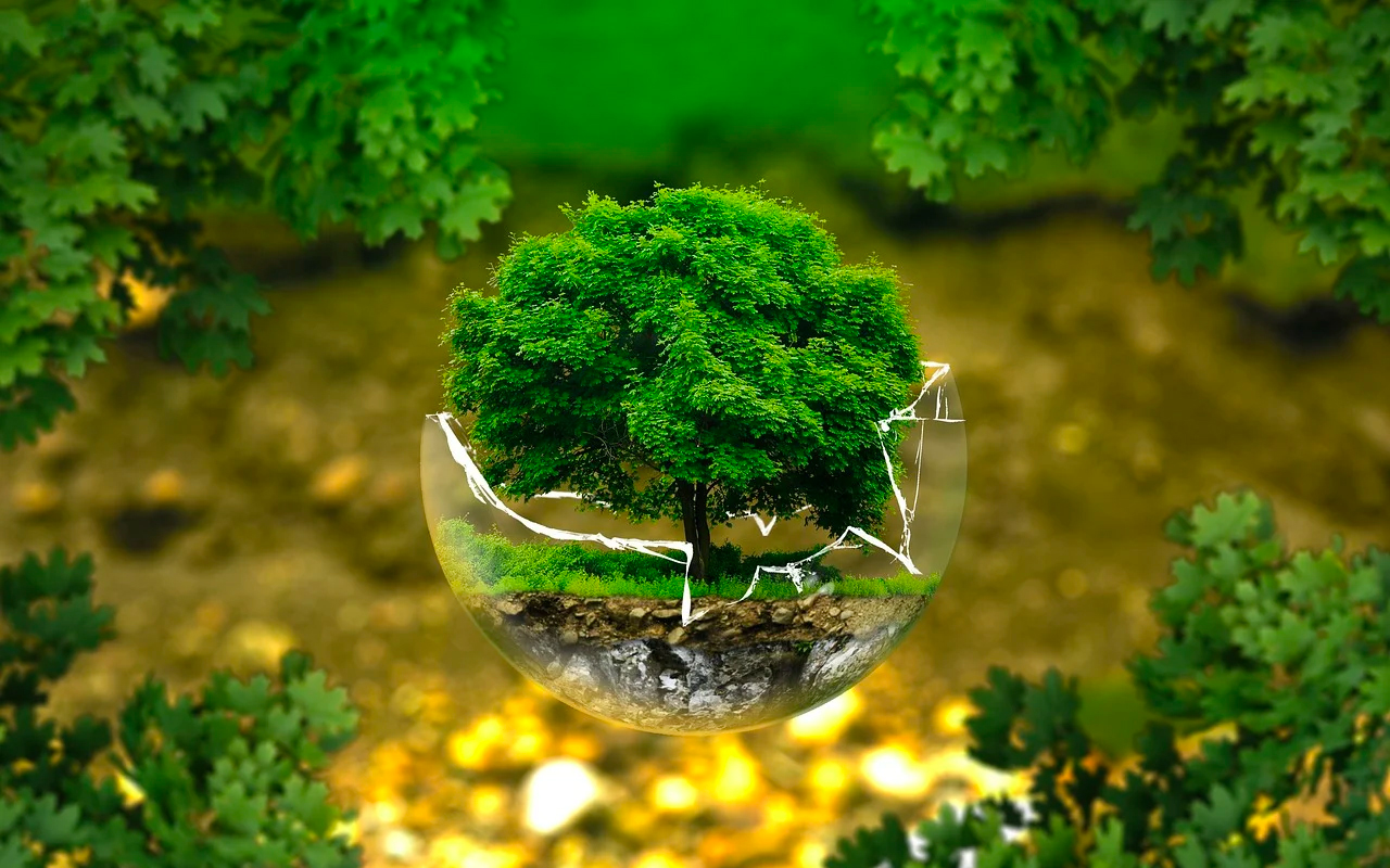 a tree is growing in a glass ball
