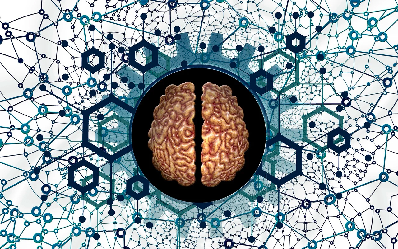 connections in the brain